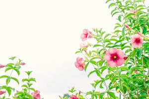 pink flowers plant