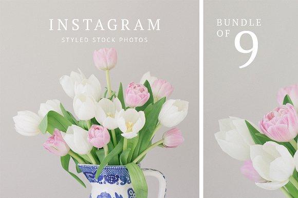 Instagram Bundle Tulip Styled Stock