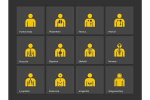 Human body, health immune system icons.