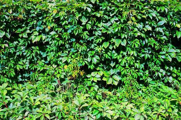 Natural Leaves Wall Textured Backdrop