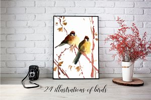 Watercolor birds illustrations