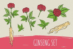 Ginseng collection