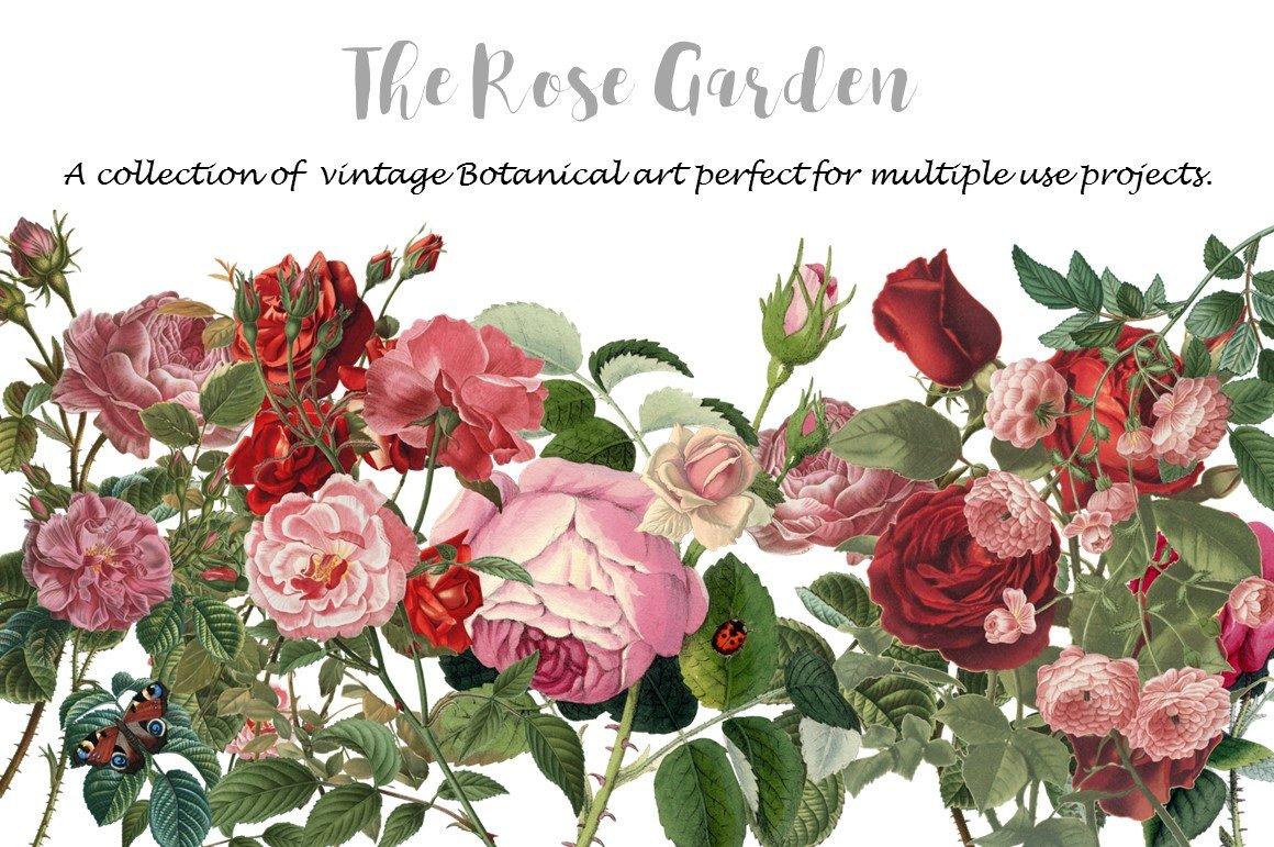 Rose Garden ~ Invitation Templates ~ Creative Market