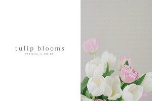 Soft & Feminine Tulips