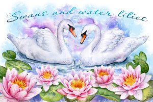 20% OFF! Water lilies and swans.