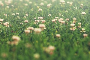 vintage meadow flowers on green grass background. Spring sunny photo