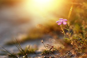 spring meadow flower on natural sunset background