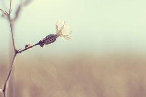 vintage spring flower on natural sky background