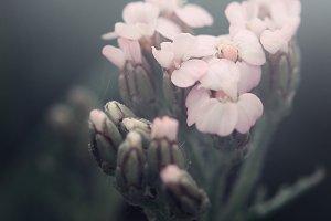 soft spring pink flowers on dark natural background
