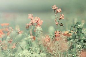 many unusual vintage retro pink meadow flowers