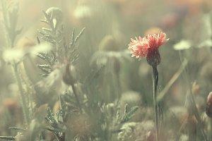 vintage pink flower in green grass background