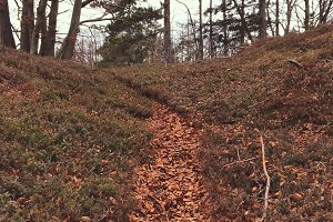 Path in the Autumn Forest vsco