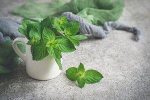 Fresh mint in white mug on a gray background