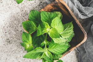 Fresh mint in a wooden bowl on a gray background