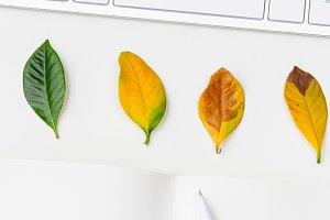 Autumn seasonal workplace