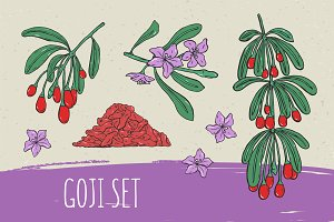 Goji illustrations and seamless