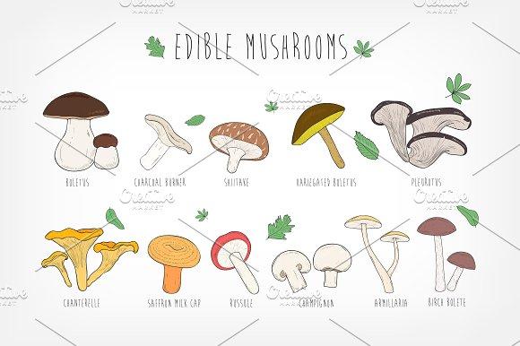 Set Of Eatable Mushrooms