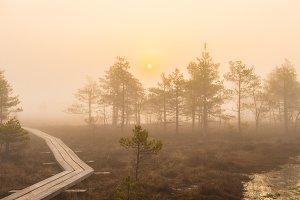 Fog in the swamp at sunrise