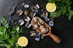 Vongole shellfish decorated with ice
