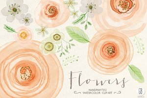 Watercolor flowers, rose, ranunculus