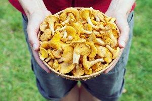 Basket with chanterelle mushrooms