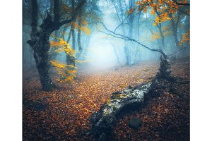 Mystical autumn forest with path in fog. Old Tree