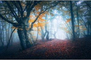 Dark fog forest. Mystical autumn forest with trail in blue fog