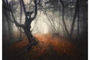 Dark fog forest. Mystical autumn forest with trail in yellow fog
