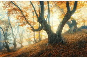 Amazing forest in fog. Colorful landscape with foggy forest
