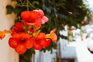 Alleyway Flowers 3