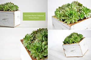 Succulent Planter Stock Photos