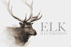 Elk Wildlife Illustration