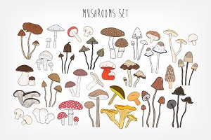 Set of different types mushrooms