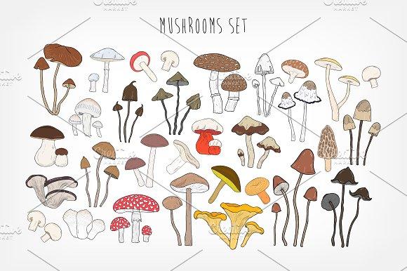 Set Of Different Types Mushrooms