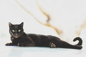 Black Cat on a Hot Tin Roof
