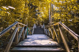 Stairs in the autumn forest