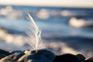Seagull feather stuck in a rock