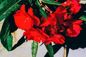Blooming flowers Minimal Style