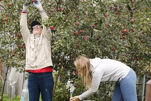 Father and daughter collecting apple