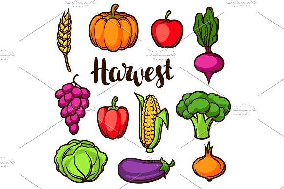 Harvest Set Of Fruits And Vegetables Autumn Seasonal Illustration