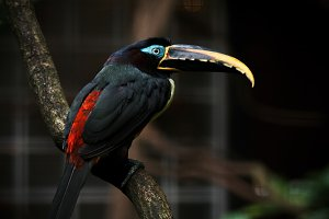 Exotic toucan sitting on a branch.