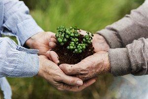 Planting activity