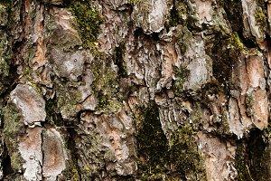 Tree bark texture close-up
