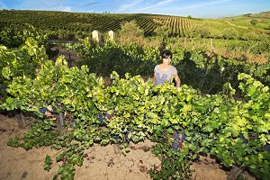 woman in vineyards