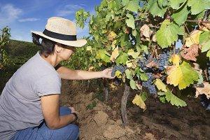 woman in vineyards