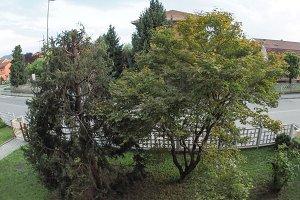 trees grove seen with fisheye lens