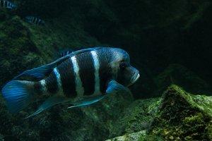 reef fish, underwater