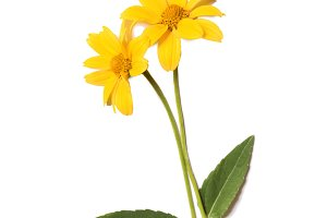 Yellow summer flowers