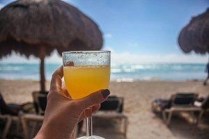 Mimosa on Ocean Beach