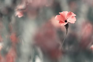 pink soft meadow flower on vintage nature background